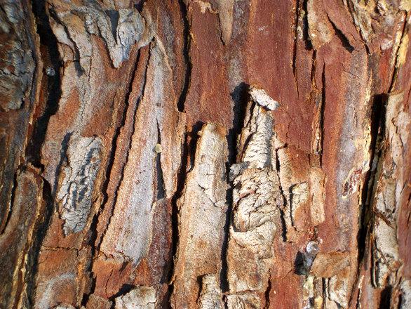 Drzewołazy – co to właściwie jest?