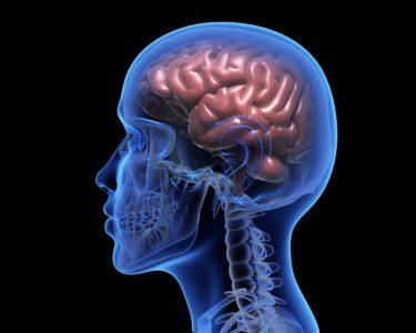 badanie pracy mózgu