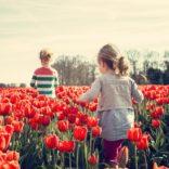 Praca w Holandii bez języka – czy to możliwe?